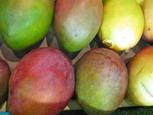Mangoes on display